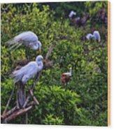 Great Egret Pair Wood Print