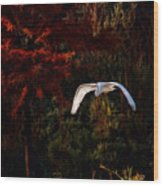 Great Egret Paradise Flight Wood Print