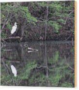 Great Egret Resting Wood Print