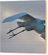 Great Egret Soaring Gracefully Wood Print