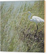 Great Egret Through Reeds Wood Print
