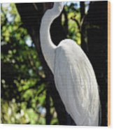 Great Egret Up Close Wood Print