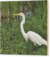 Great Egret Walking Wood Print