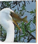 Great Egret With Catch 2 Wood Print