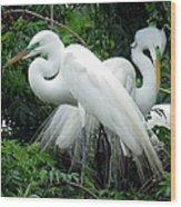 Great Egrets 10 Wood Print