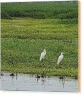 Great Egrets Wood Print