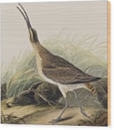 Great Esquimaux Curlew Wood Print