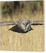 Great Gray Owl In Flight Wood Print