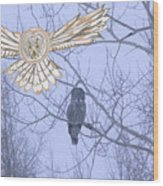 Great Gray Owl Together Wood Print