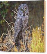 Great Grey Owl Portrait Wood Print