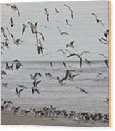 Great Gull Group On The Beach Wood Print