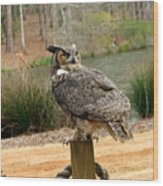 Great Horned Owl 1 Wood Print