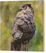 Great Horned Owl At Attention Wood Print