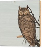 Great Horned Owl At Dusk Wood Print