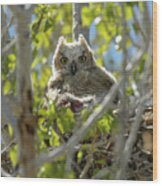 Great Horned Owl Chick Wood Print