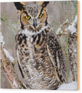 Great Horned Owl Nature Wear Wood Print