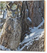 Great Horned Owl On Snowy Branch Wood Print