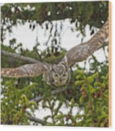 Great Horned Owl Takeoff Wood Print