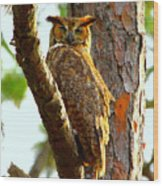 Great Horned Owl Wink Wood Print