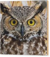 Great Horned Stare Wood Print