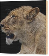 Great Lioness Wood Print