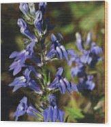 Great Lobelia Blues Wood Print