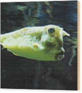 Great Longhorn Cowfish Swimming Along Underwater Wood Print