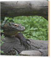 Great Look At A Komodo Monitor Lizard With Long Claws Wood Print
