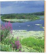 Great Meadows National Wildlife Refuge Wood Print by John Burk