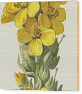 Great Mullein  Wood Print