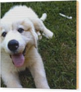 Great Pyrenees Puppy Wood Print