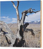 Great Sand Dunes National Park Fallen Tree Portrait Wood Print