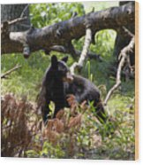 Great Smoky Mountain Bear Wood Print