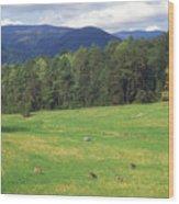 Great Smoky Mountains Deer Grazing In Field Wood Print