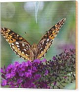 Great Spangled Fritillary Butterfly Wood Print