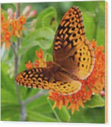 Great Spangled Fritillary I Wood Print