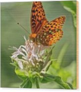 Great Spangled Fritillary On Bee Balm Wood Print