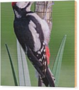Great Spotted Woodpecker 1  Wood Print