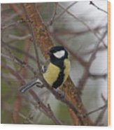 Great Tit Male Wood Print