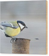 Great Tit On The Tube  Wood Print