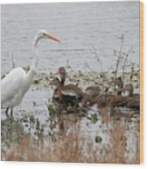 Great White Egret And Ducks Wood Print