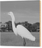 Great White Egret Black And White Wood Print