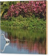 Great White Egret Hunting In A Pond In Mexico With Iguana And Re Wood Print