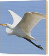 Great White Egret In Flight . 40d6845 Wood Print