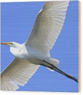 Great White Egret In Flight . 40d6850 Wood Print