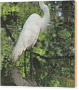 Great White Egret In Spring Wood Print