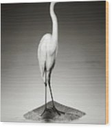 Great White Egret On Hippo Wood Print