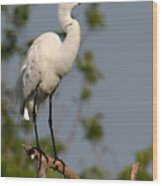 Great White Egret Pose Wood Print