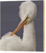 Great White Egret Posing Wood Print