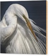 Great White Egret Print One Wood Print